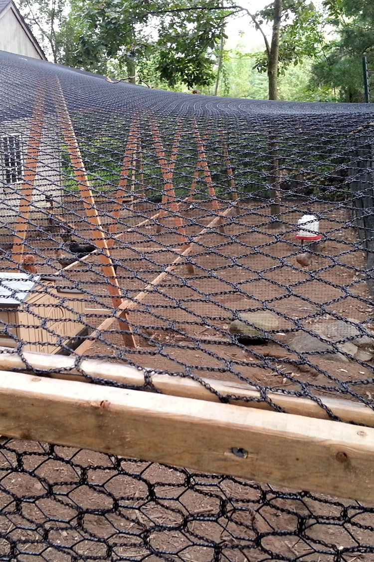Overrun How I Made My Chicken Run Predator Proof My Pet