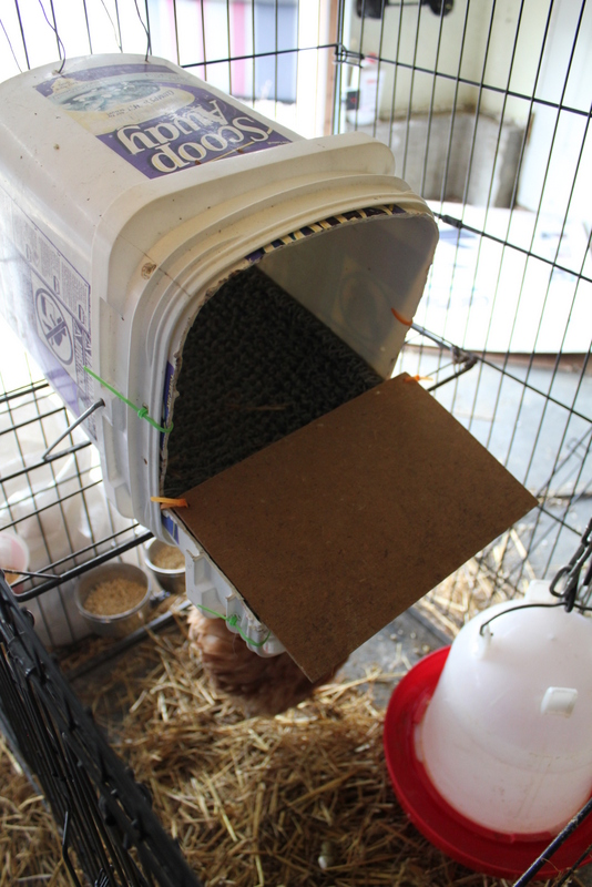 Diy Roll Away Nest Box My Pet Chicken Blog