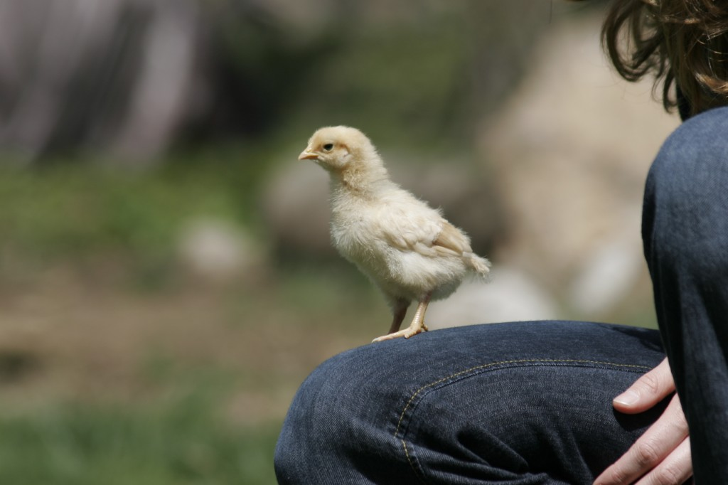 Friendly chick!