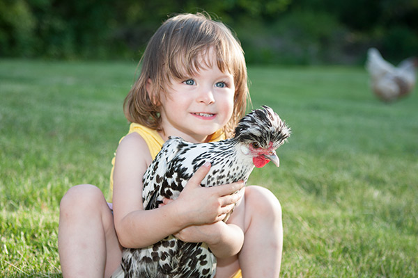 child and pet hen