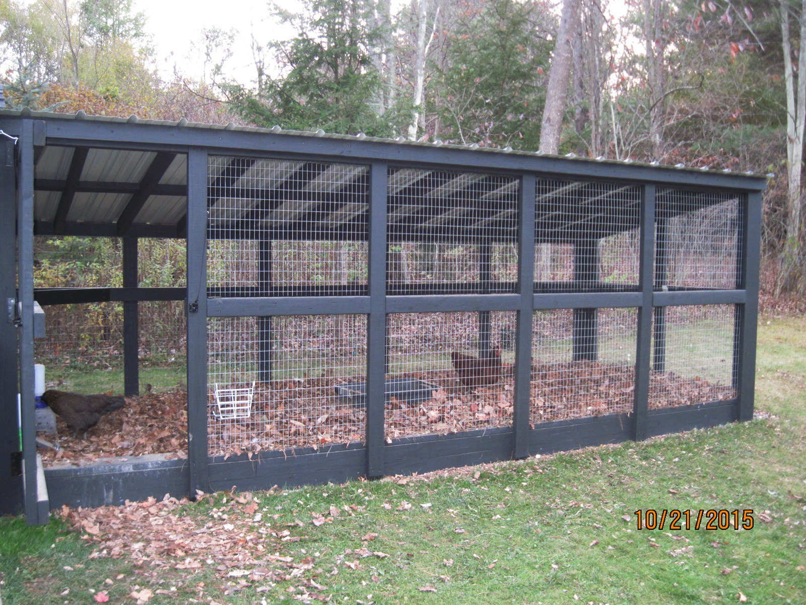 5 Tips For Designing A Custom Chicken Run My Pet Chicken