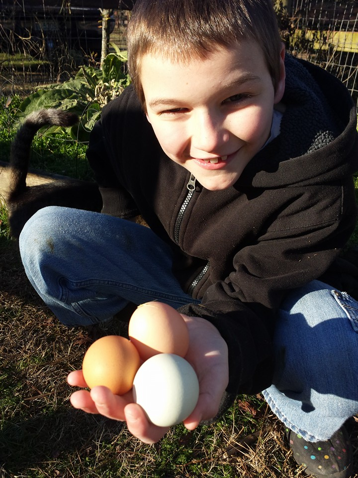 Winter egg strike is over--boy with pretty colored eggs