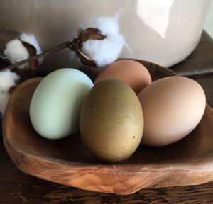 eggs from my pet chickens