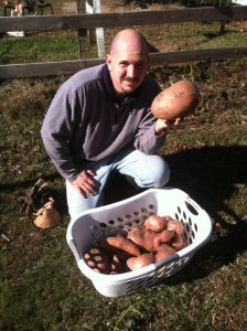 How I trick my chickens into growing my garden sweet potatoes