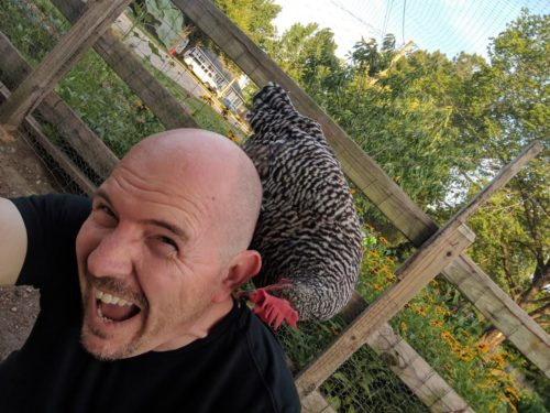 Chicken Pirate with a Barred Plymouth Rock chicken on his shoulder