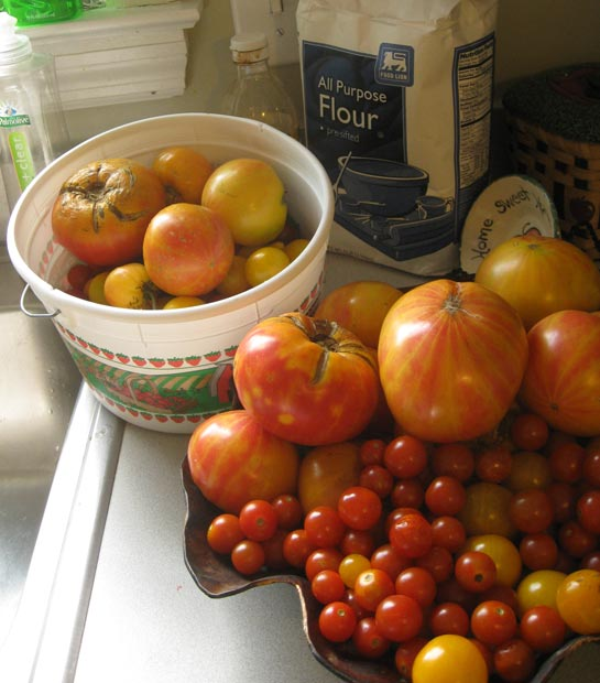 How much I saved: a week's worth of heirloom tomatoes.