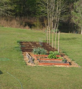 Gardening for your chickens with spring garden beds