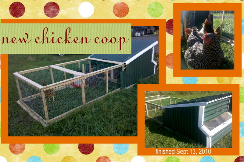 DIY chicken coop 2.0