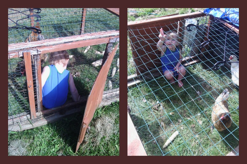 DIY chicken coop, or DIY child coop?