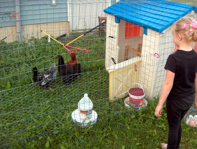DIY chicken coop 1.0