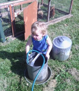 Keep clean water in the coop! My son helps out.