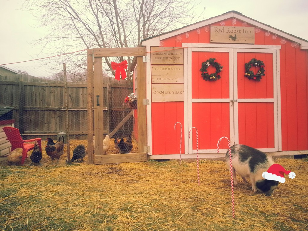 Lauren's Lovely Pig and Coop- Front View