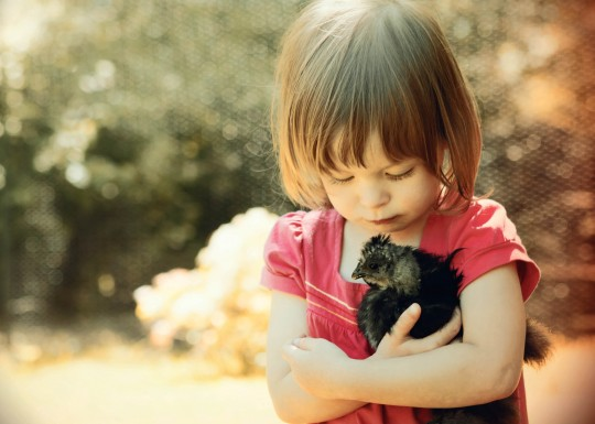 young girl with beloved pet chicken