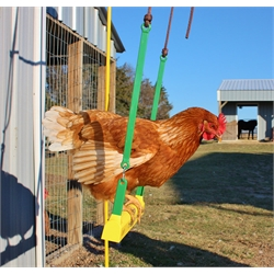 gifts for chickens The-Chicken-Swing