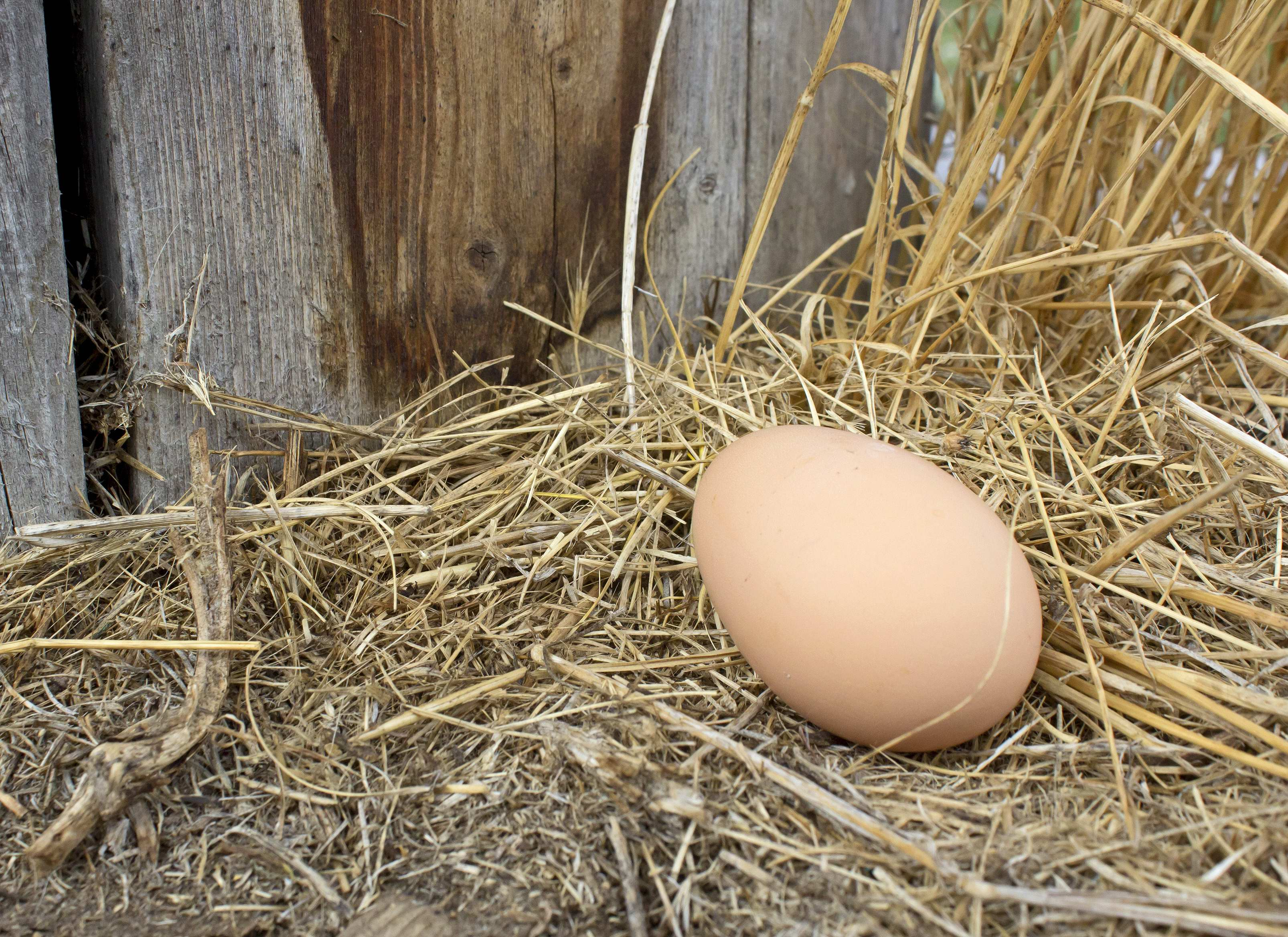 What should I do when my chickens lay eggs on the floor instead of in nests?