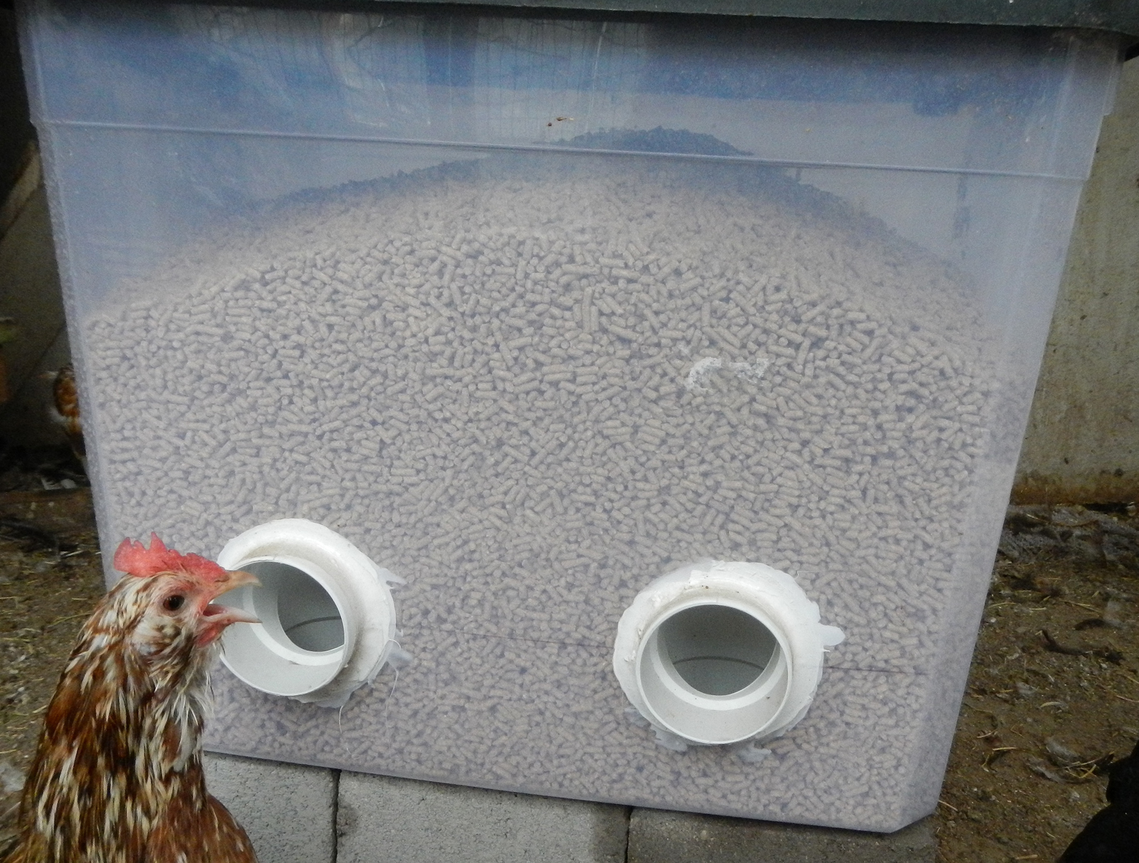 feeders chicken little a hanging giant poultry miller feeder metal