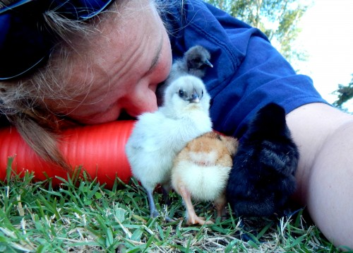 Chick blooper: chicks snuggling