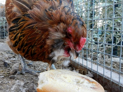 chicken spoiled with bagels