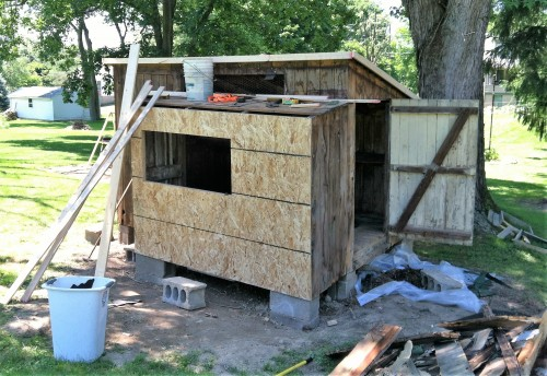 Rebuilding the coop: starting to look strong and solid!