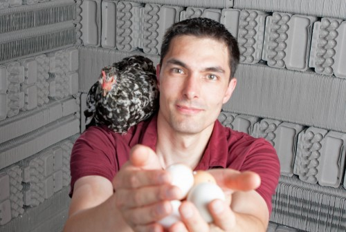 egg gathering break on your chicken dream job
