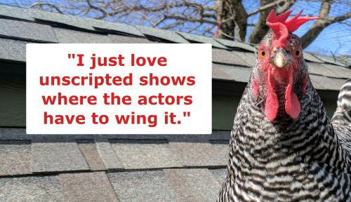 barred rock chicken joke