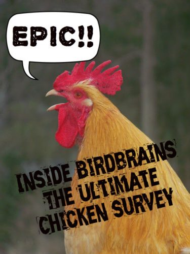 "Chicken saying ""epic!"" chicken joke"