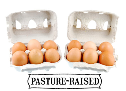 Pasture-raised grocery store eggs are the best