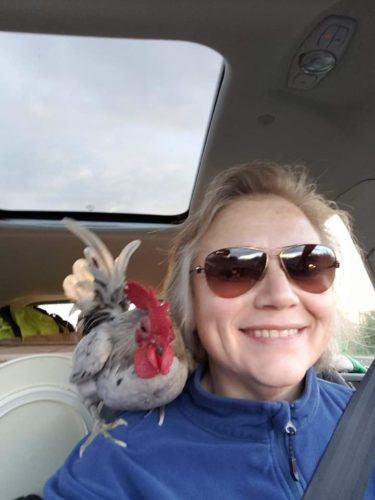Chicken Pirate with a bantam rooster on her shoulder.
